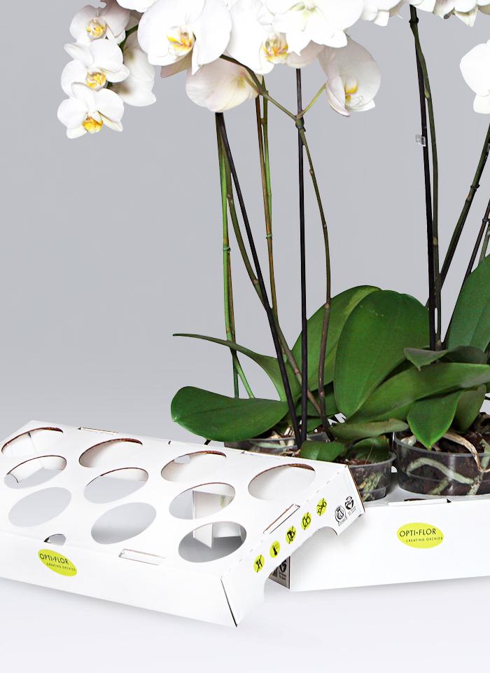 Wasserabweisendes Blumentray aus Wellpappe